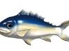 2006fish